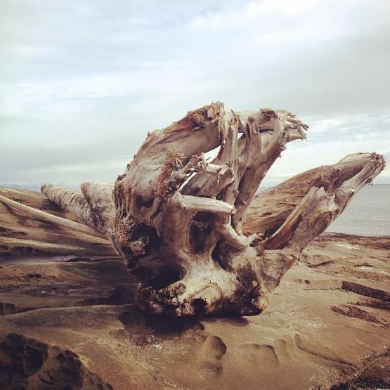 driftwood-galiano-island-andrea-demers